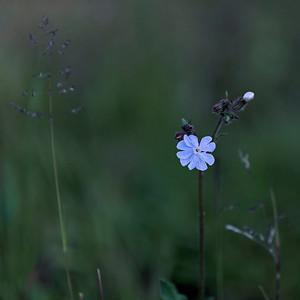 Divers fleurs I