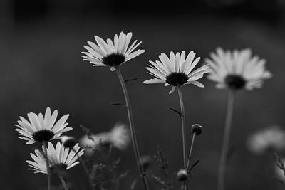 _MG_3050_©Ch  Mouton