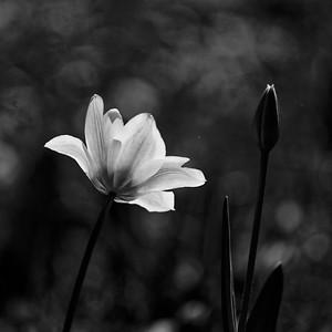 _MG_3682_©Ch  Mouton