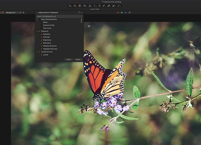 Capture One Pro - Copy Adjustments Issue