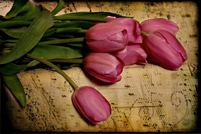 Birthday Tulips for Patricia Explore #326 Feb. 18 2010