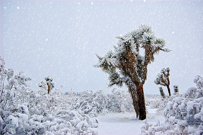 Explore # 143 Dec. 10 2013 Mojave Desert Snow