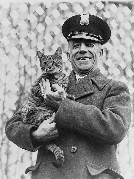 blackl and white half-length portrait, standing, facing front, holding a white House cat.