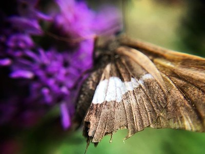 #forartssake Reminds me of the lensbaby. But distance is horrible... I'm nearly touching the skipper. #lamyik
