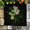 Butterfly Magnet - Allium Millenium #plantsilike #loveyourgarden