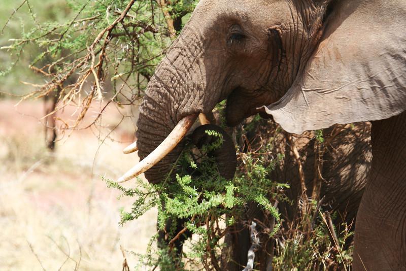 20121027-serengeti-elephant (5)