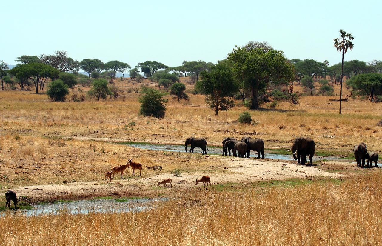 20121025-tarangire-elephant (2)