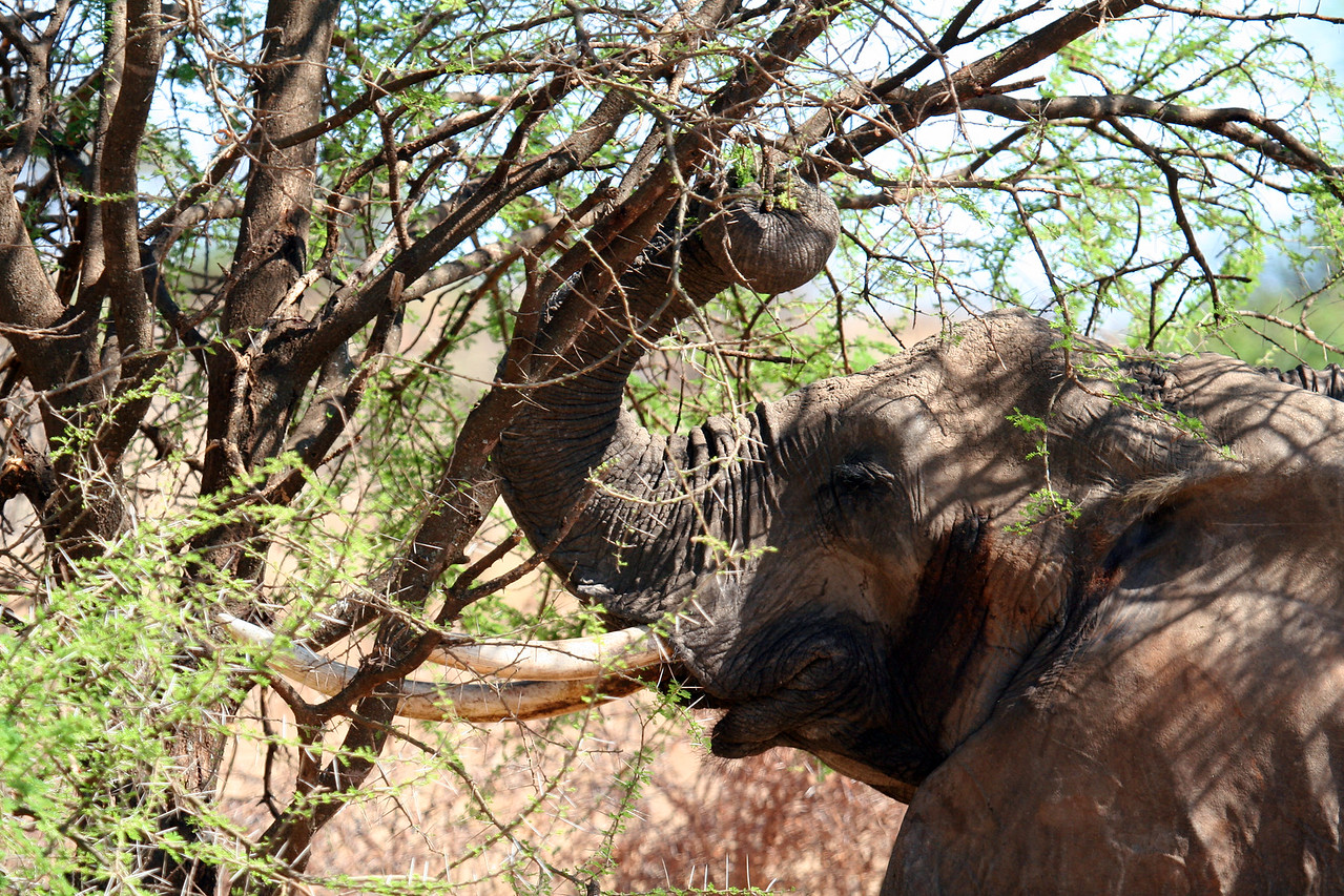 20121025-tarangire-elephant (10)