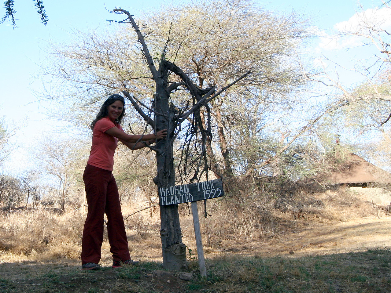 20121024-tarangire-baobab-robin (1)