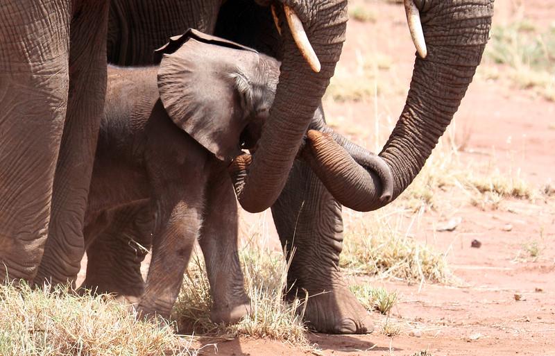 20121027-serengeti-elephant (7)