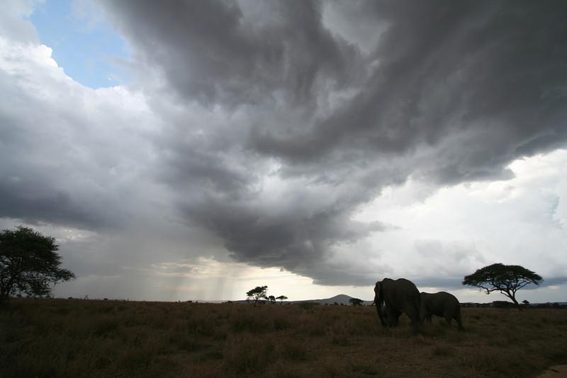 20121027-serengeti-elephant (11)