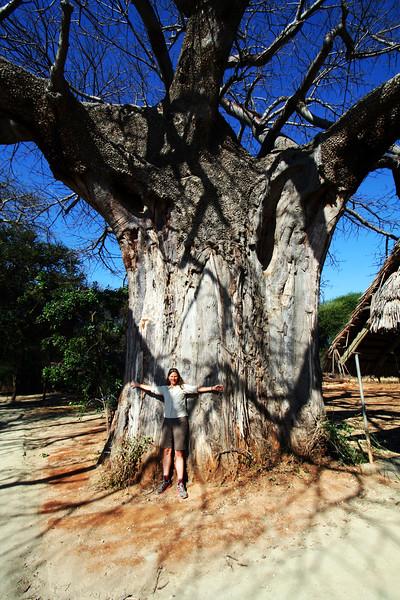 20121025-tarangire-baobab-robin (10)