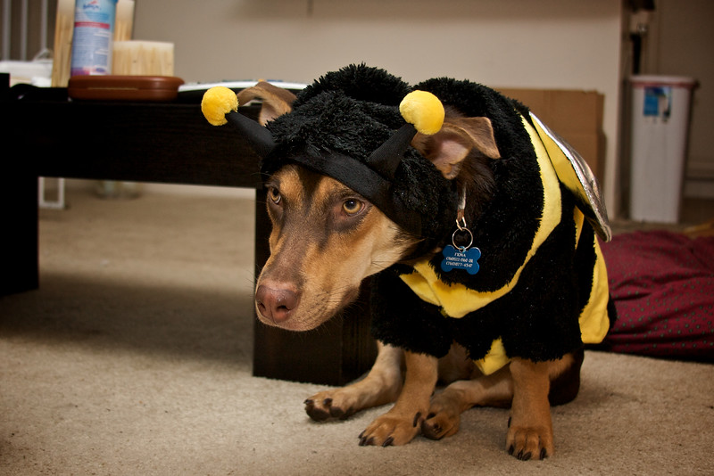 Fiona the Bee 3