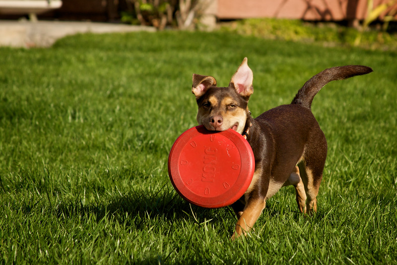 Fiona w/ Frisbee