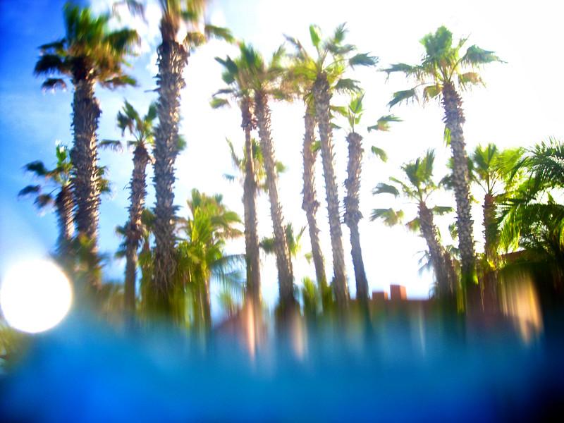 underwater palms
