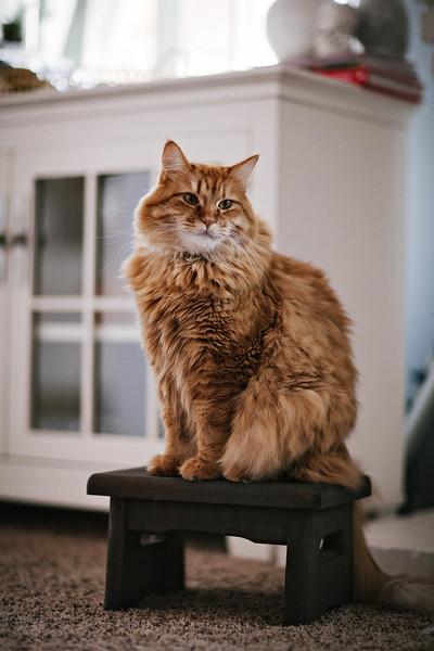Archie on a pedestal.
