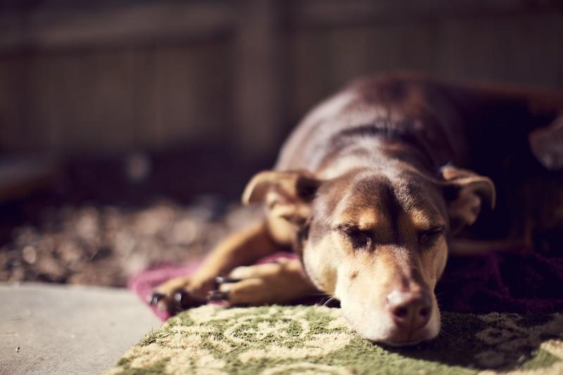 Sunning dog