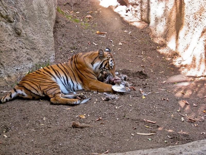tiger-kill.jpg