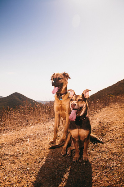 dogs on the mountain
