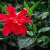 Red Flower (2013-04-19_0827)