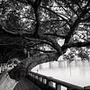Crooked Tree (2013-12-13_6168)