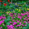 Beautiful Spring Flowers (2013-05-06_2324)
