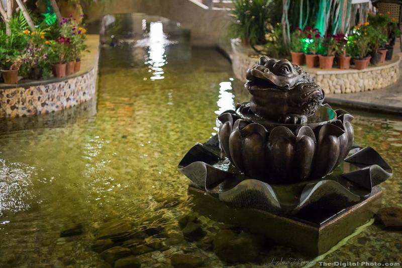 Pond at night ISO 10,000 (2013-10-21_3240)
