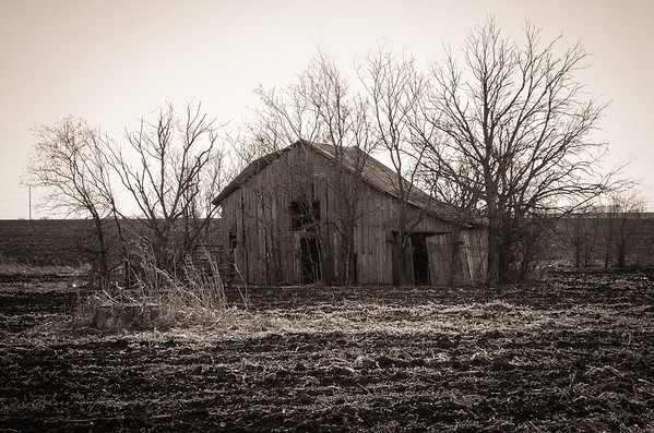 Hutto Farm Remnants