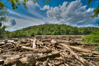 Log Pile at the Chattahoochee River National Recreation Area