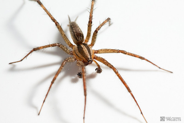 Hobo Spider, A Tub Story