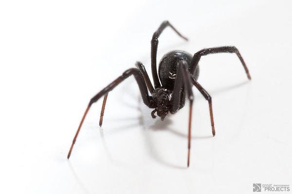 Black Widow 3
