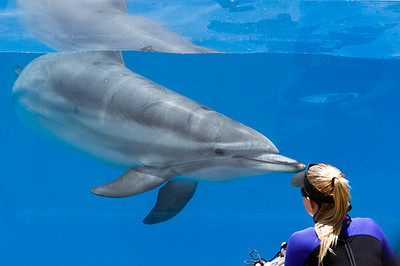 Sea World - Dolphin & Trainer