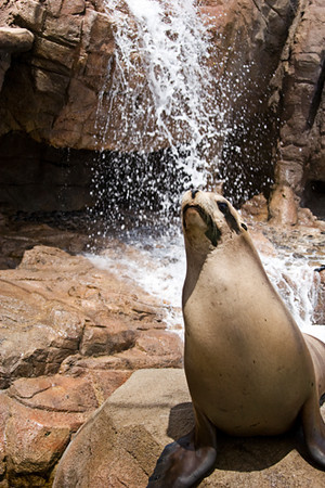 Sea World - Sea Lion