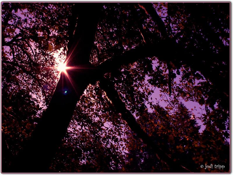 Lilac sky.jpg