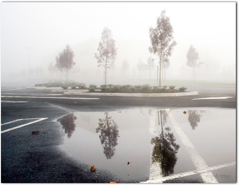 PARKING LOT IN THE FOG.jpg