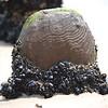 BeachDay080703_300