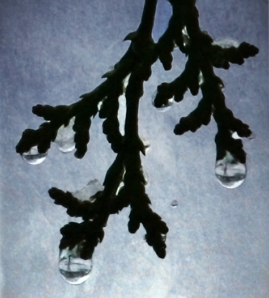 trees in drops