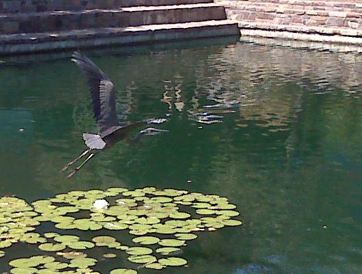 BB-Heron