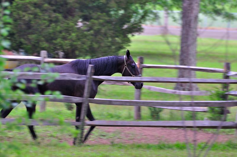 Horse_20090811_0034