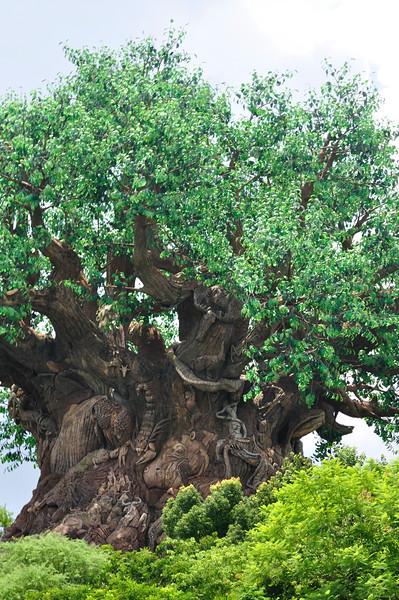 DisneyDay3__20090708_0814__0018