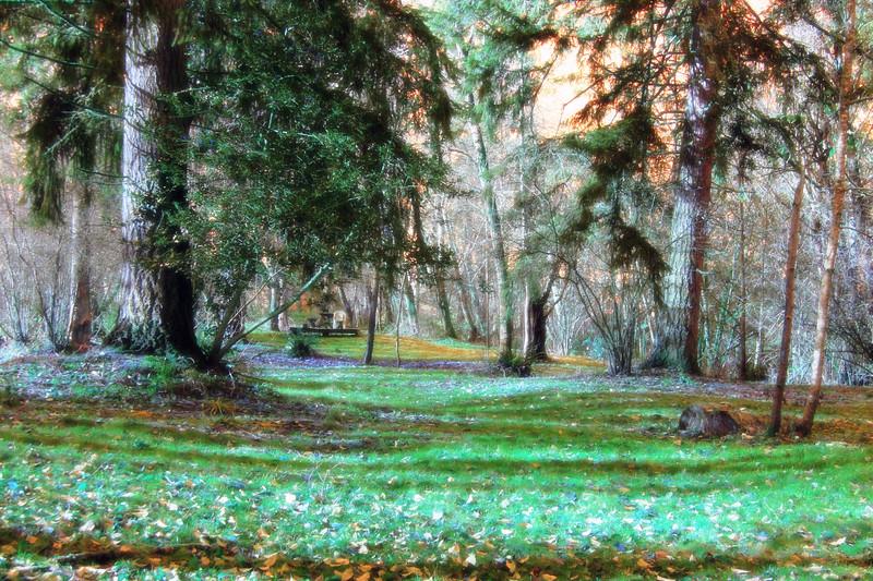 frosty morning infra-red.jpg