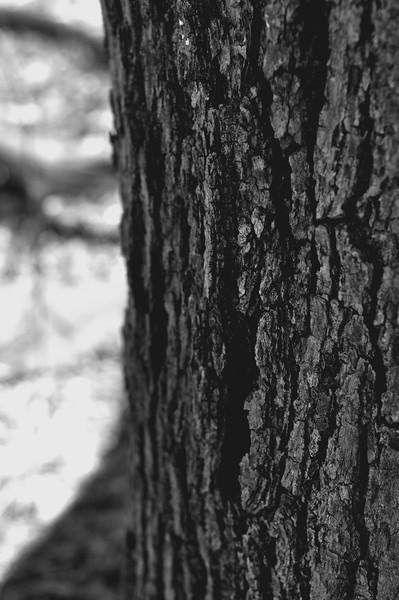 TreeBW