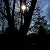 SunTrees_color