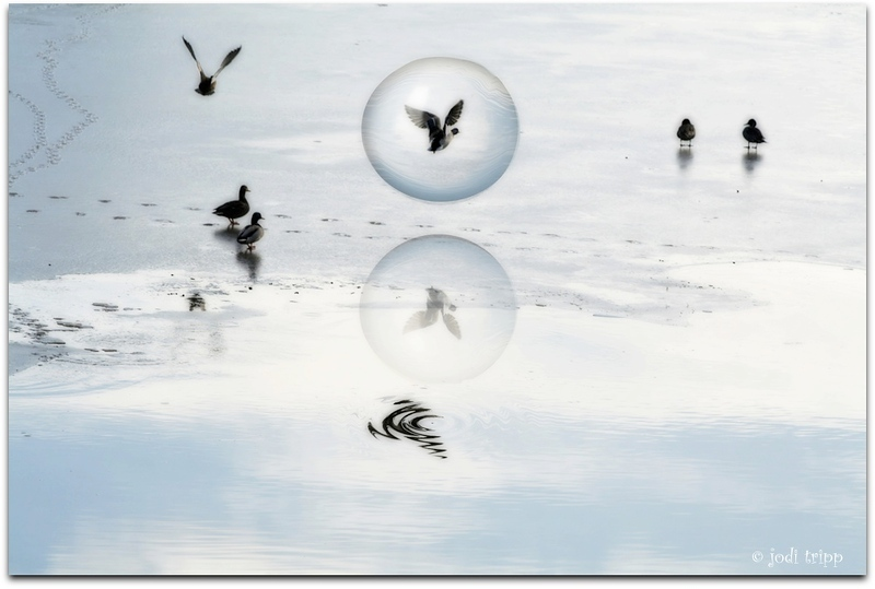 Duck Bubbles