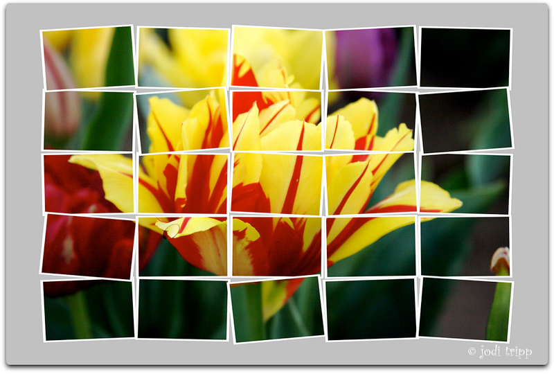 Tulip collage.jpg