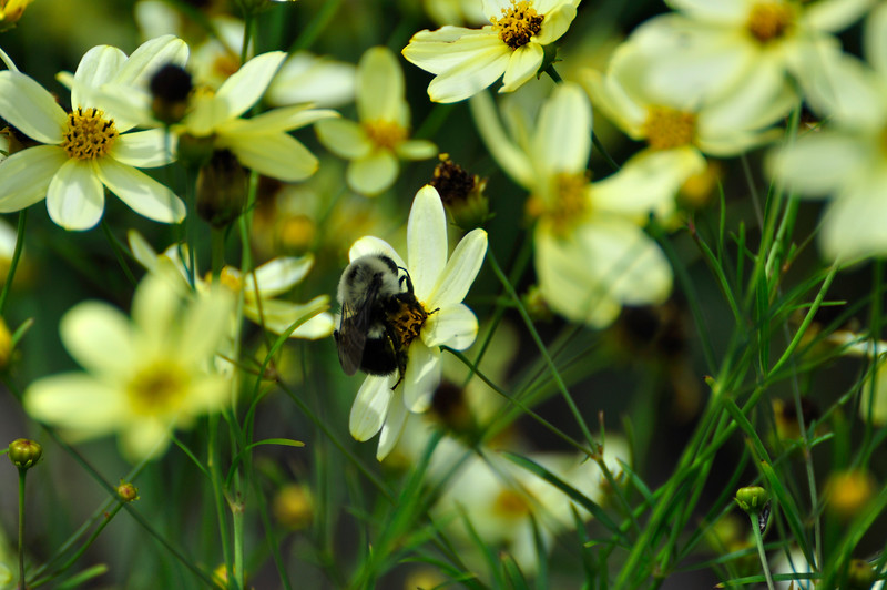 Bee_20090808_0032