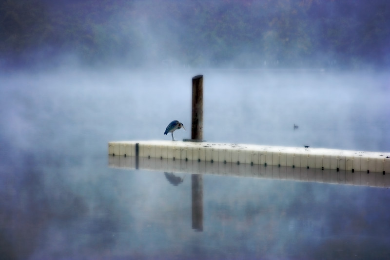 big bird in the fog.jpg
