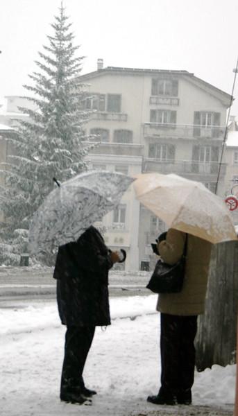 Snowy Gossip