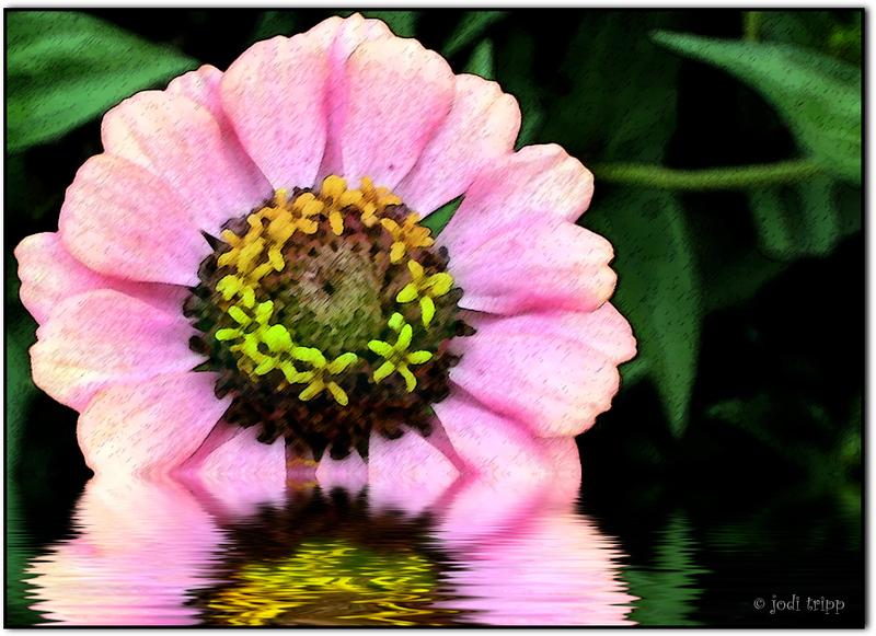 textured flower.jpg
