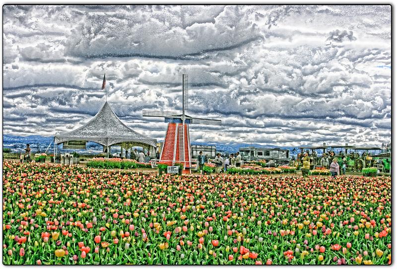 Tulips relief